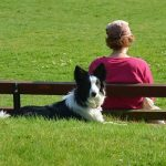 Best 10 Emotional Support Animal Dog Breeds